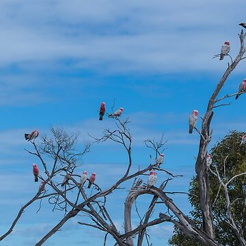 Galah Party by decoaddict