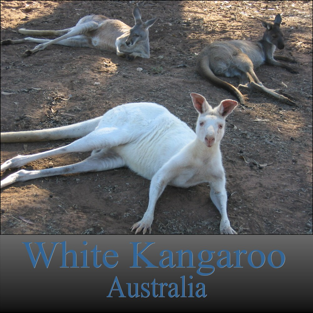 White Kangaroo by Debbie  Jones