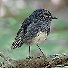 Nordinsel Robin, Neuseeland. von Roy  Massicks