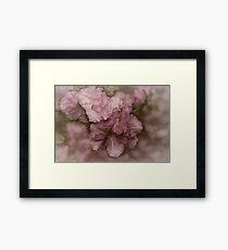 Dusky Pink Azalea Framed Print
