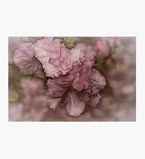 Dusky Pink Azalea Photographic Print