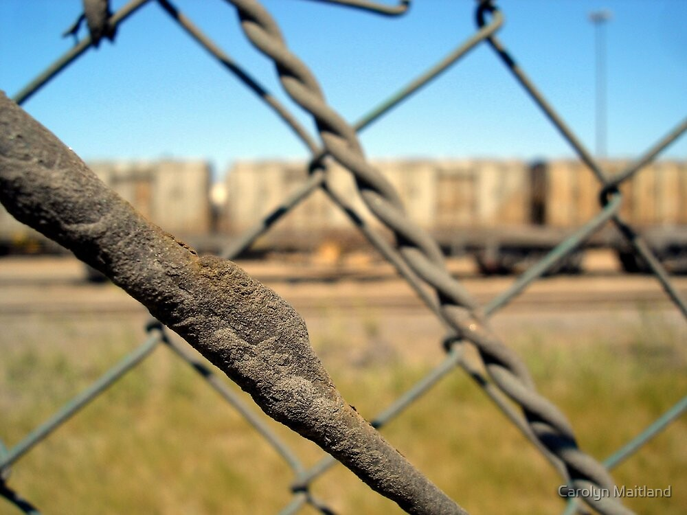Through the wire by Carolyn Maitland