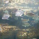 Favorite Fishing Spot by cdfletcher