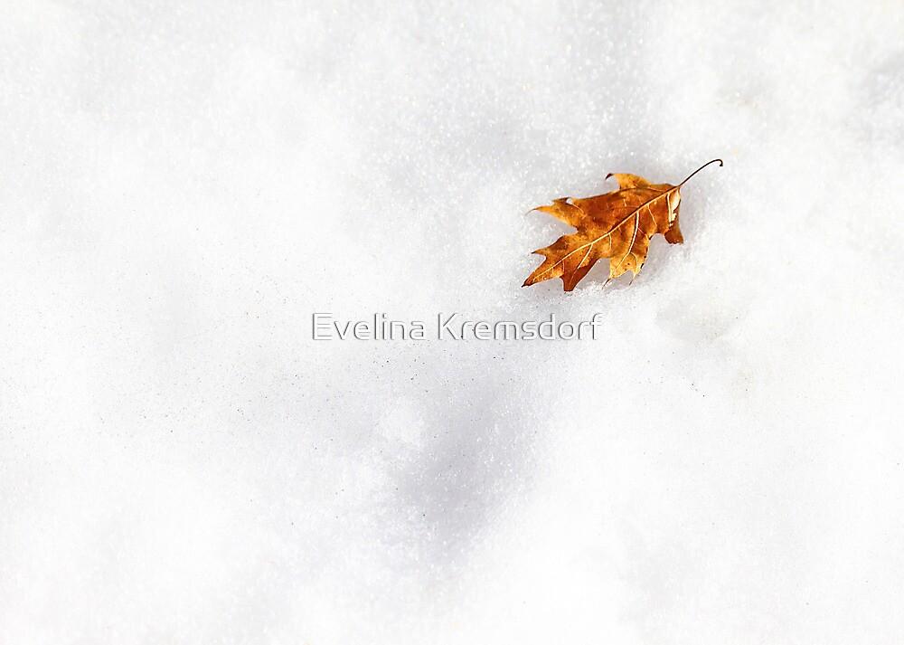 Fallen by Evelina Kremsdorf