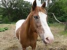 A Very Friendly Horse by Barberelli