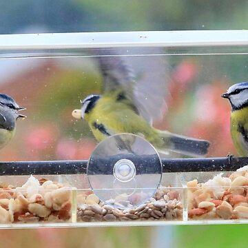 Window box feeder - image 2 by missmoneypenny