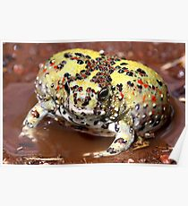 Holy Cross Toad Poster