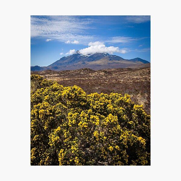 Gorse on the Isle of Skye, Scotland Photographic Print
