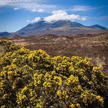 Gorse on the Isle of Skye, Scotland by mhowellsmead