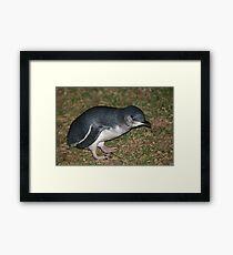 Little Penguin Framed Print