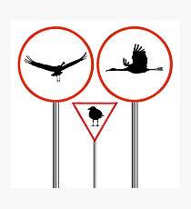 Birds traffic signs Photographic Print