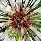 Dandelion after rain by soitwouldseem