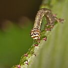 Caterpillar on the edge by Gareth Jones