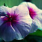 Flower by Sukanta Seal