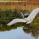 Dancing on Water by byronbackyard