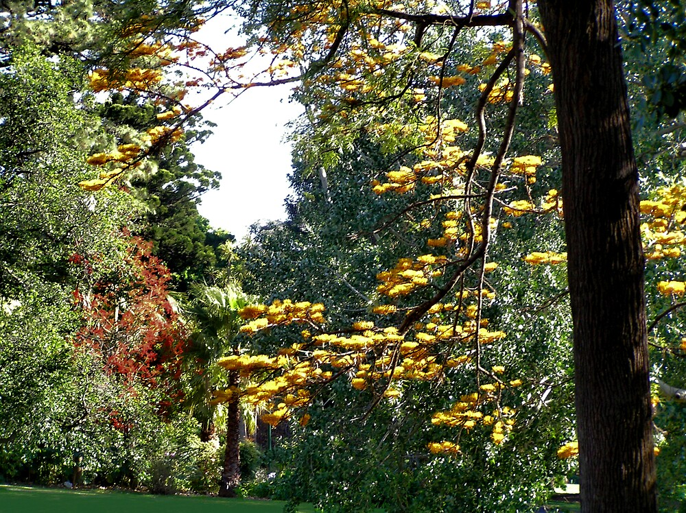 Fitzroy Gardens by Christopher Biggs