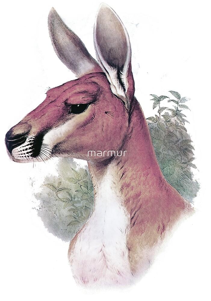 Red kangaroo portrait by marmur