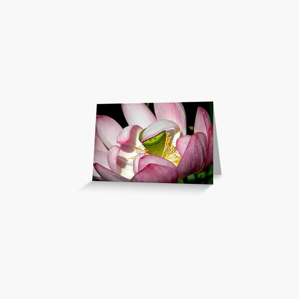 Lotus Vail Greeting Card