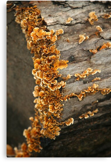 Frilly Fungi by Lisa G. Putman