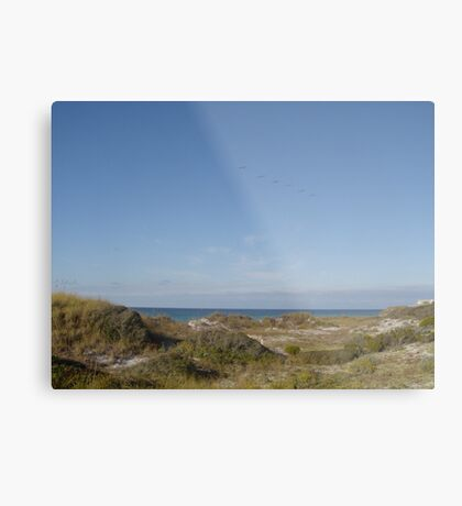 Dunes, Pelicans and the Gulf of Mexico Metal Print