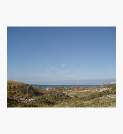 Dunes, Pelicans and the Gulf of Mexico Photographic Print