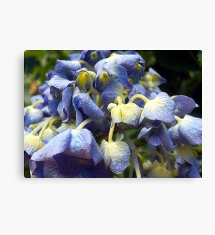 Wonderful Flowering Beauty Canvas Print