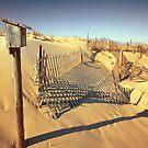 Cape Cod Dune Fence by Artist Dapixara