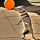 The Dog Who Loves His Balloon. by JLaverty
