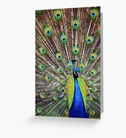 Pretty as a Peacock Greeting Card