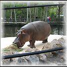 Lu the Hippo by Debbie Robbins