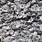 Shells by Joel Hall