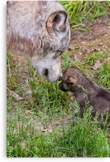 Timber Wolf And Pup by WolvesOnly