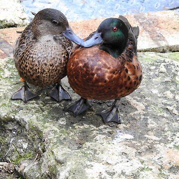 Kissing Ducks  by martina