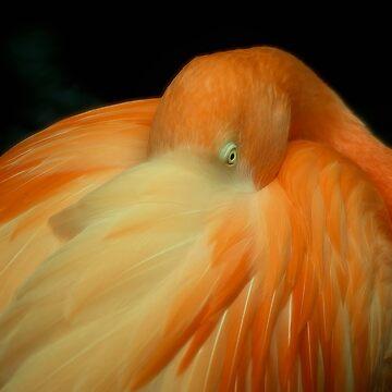 Flamingo by kdxweaver