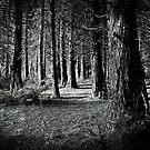 Forest light by Joseph Darmenia