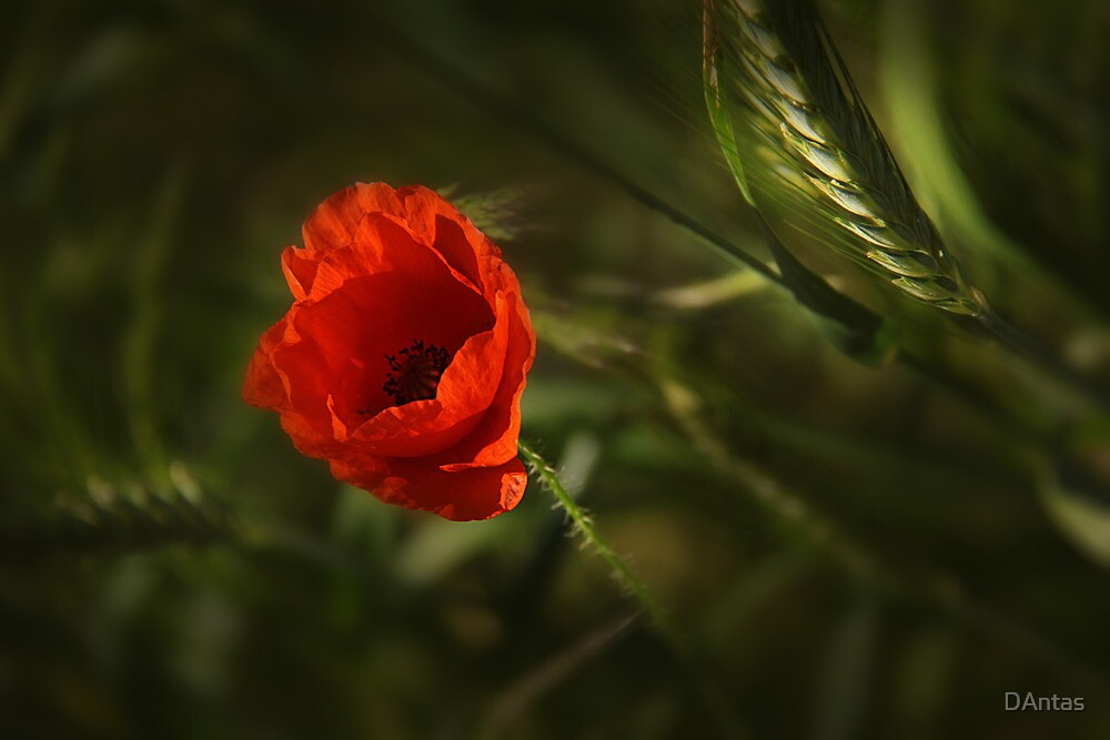 In The Shadow In The Light 2 by Danuta Antas