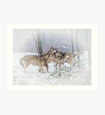 Timber Wolves Art Print