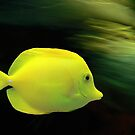 Yellow Fish by Gisele Bedard