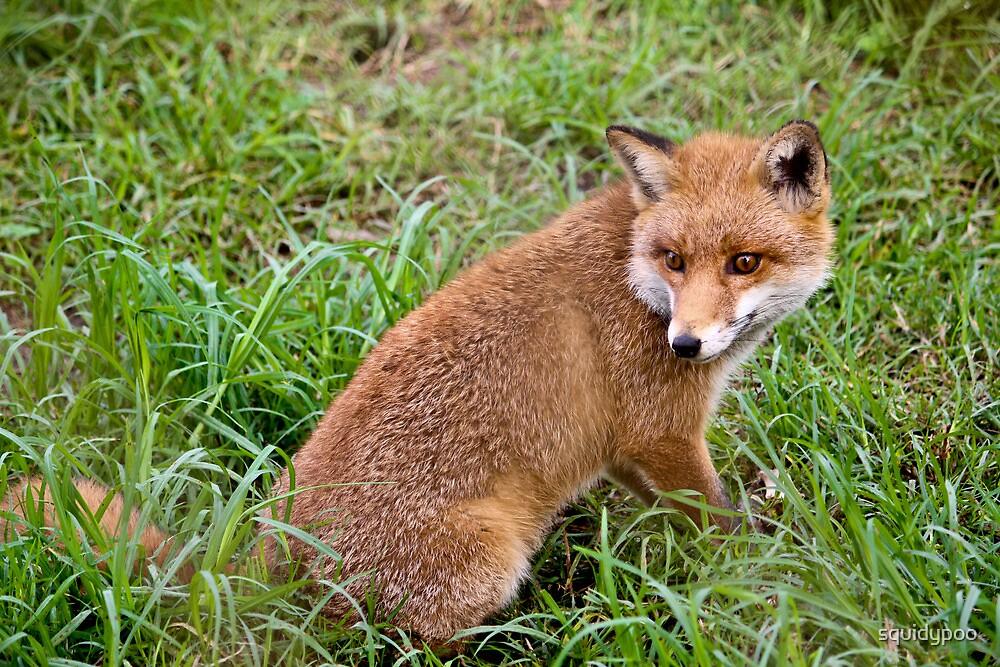 Fantastic Mr. Fox by squidypoo