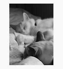 Casper and Mahtob Photographic Print