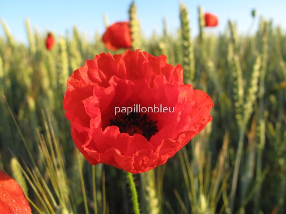 Poppy and Wheat by Pamela Jayne Smith