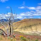 Painted Hills 2 by CarrieAnn