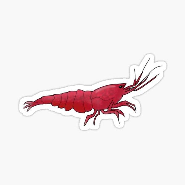 Cherry Shrimp Sticker