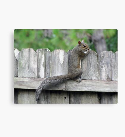 Peeking Over the Fence Canvas Print