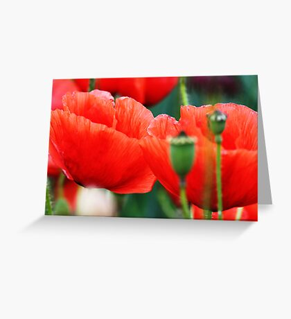 Red poppy 1 Greeting Card