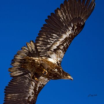 Below An Eagle     #6372 by JLWoody15Wooden