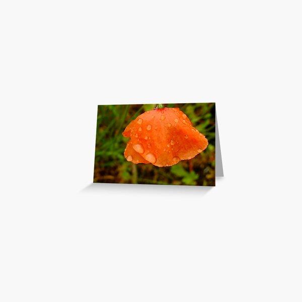 June shower, June flower Greeting Card