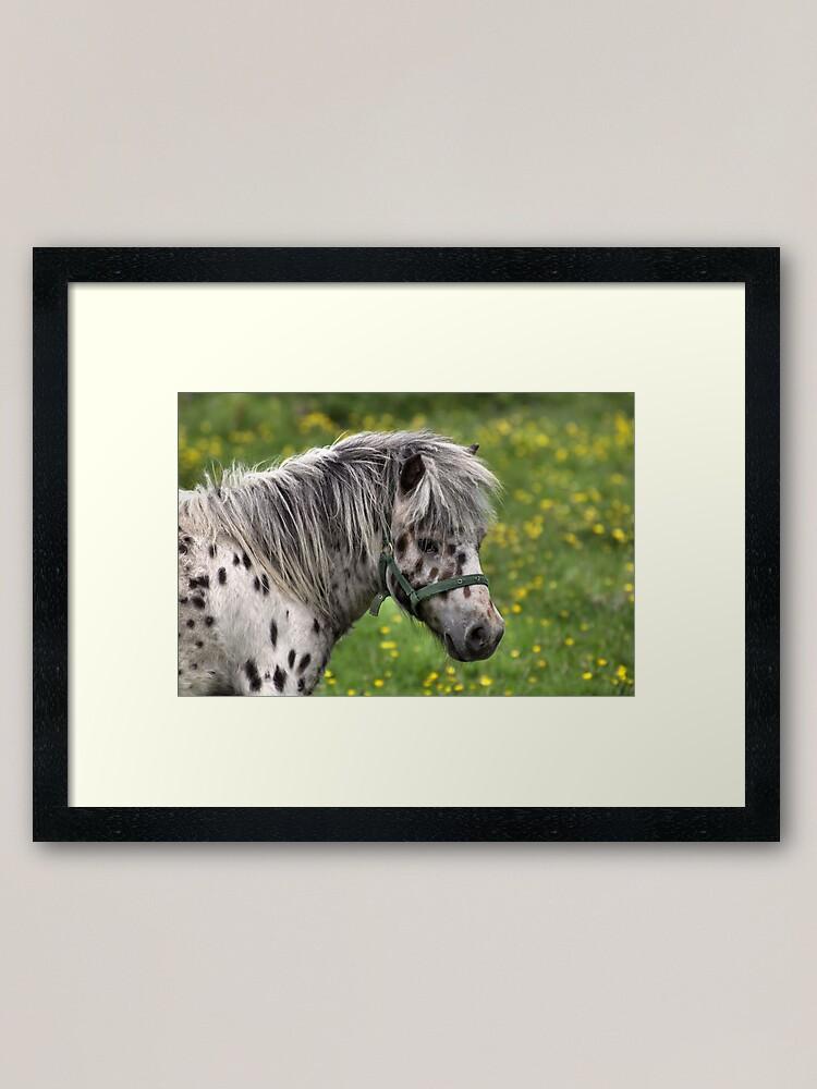 Alternate view of Portrait of a Horse Framed Art Print