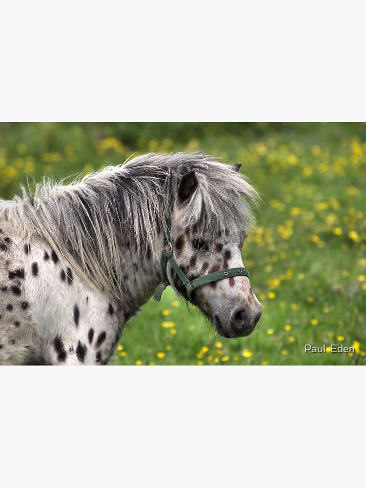 Portrait of a Horse by pauleden