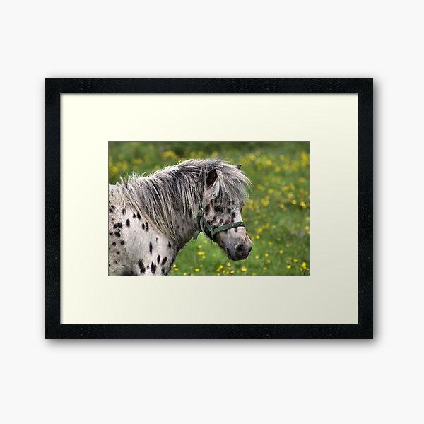 Portrait of a Horse Framed Art Print